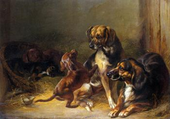 Benno Adam : Dogs and Whelps