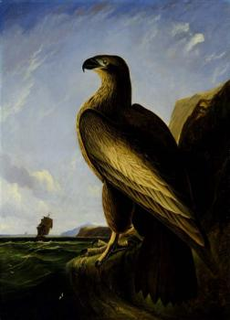 John James Audubon : Washington sea eagle