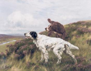 An English and Irish Setter on a Moor
