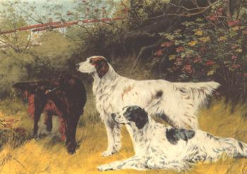 English Setters and Gordon Setters