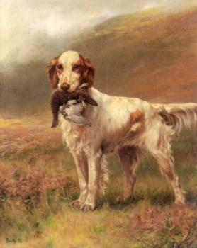 Thomas Blinks : English Setter