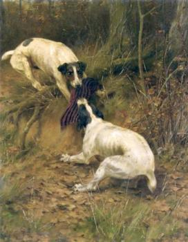 Terriers fighting