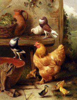 Edgar Hunt : A Chicken Doves Pigeons And Ducklings