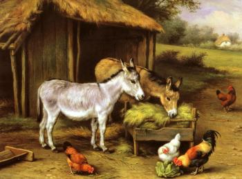 Chickens And Donkeys Feeding Outside A Barn