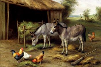 Donkeys And Poultry