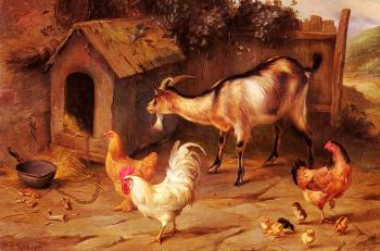 Fowl Chicks And Goats By A Dog Kennel