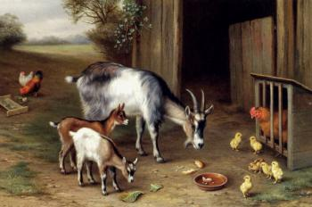 Goats And Poultry