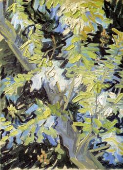 Vincent Van Gogh : Branches of Flowering Acacia