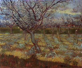 Vincent Van Gogh : Apricot Trees in Bloom