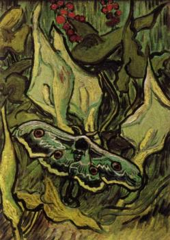 Vincent Van Gogh : Death's Head Moth