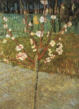 Vincent Van Gogh : Flowering Almond Tree