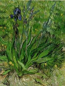 Vincent Van Gogh : The Iris