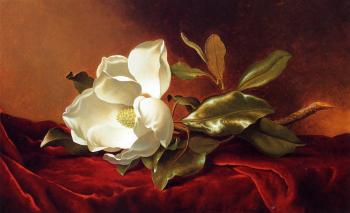 Martin Johnson Heade : A Magnolia on Red Velvet