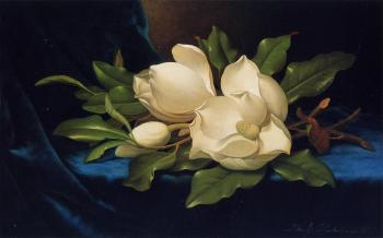Martin Johnson Heade : Giant Magnolias on a Blue Velvet Cloth