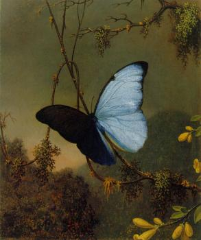 Martin Johnson Heade : Blue Morpho Butterfly