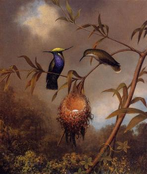Martin Johnson Heade : Black-Breasted Plovercrest