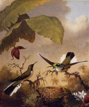Martin Johnson Heade : Black-Eared Fairy