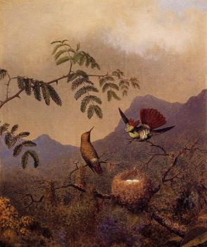 Martin Johnson Heade : Frilled Coquette
