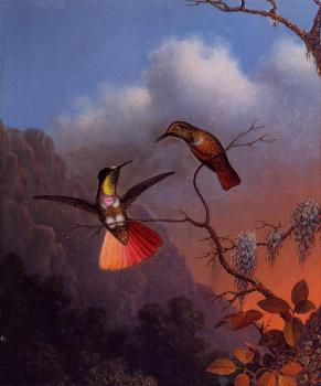 Martin Johnson Heade : Hooded Visorbearer