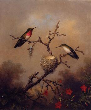 Martin Johnson Heade : Ruby-Throated Hummingbird