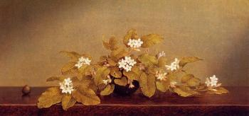 Martin Johnson Heade : Trailing Arbutis