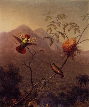 Martin Johnson Heade : Tufted Coquette