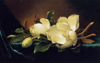Martin Johnson Heade : Two Magnolias and a Bud on Teal Velvet