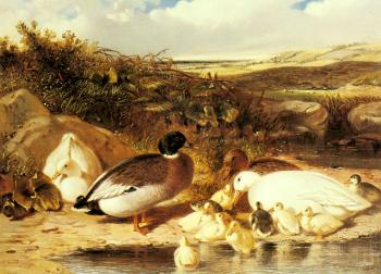 John Frederick Jr Herring : Mallard Ducks and Ducklings on a River Bank