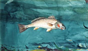 Winslow Homer : Channel Bass