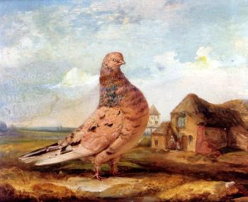James Ward : A Fancy Pigeon