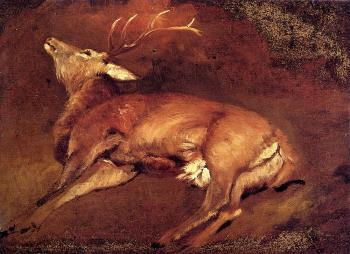 Study Of A Dead Stag