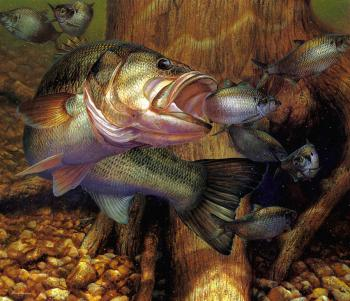 Mark Susinno : Opportunity Knocks, Largemouth Bass