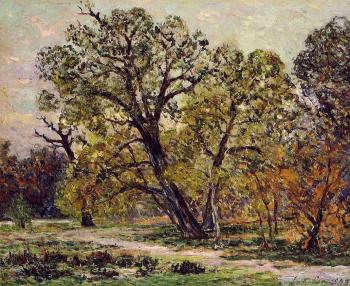 Maxime Maufra : Autumn, Fontainebleau Forest