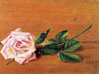 George Loftus Noyes : Rose