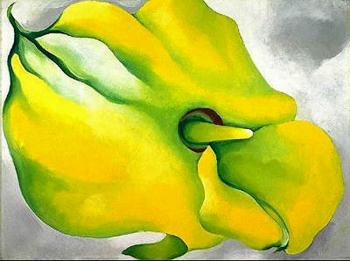 Yellow Calla