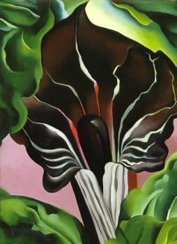 Georgia O Keeffe : Jack in the Pulpit