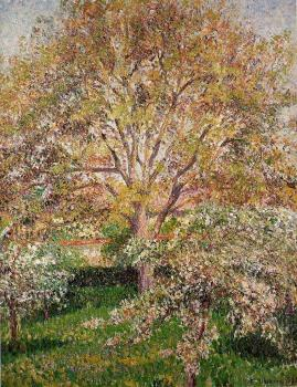 Camille Pissarro : Walnut and Apple Trees in Bloom, Eragny