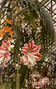 Stanley Spencer : Orchids