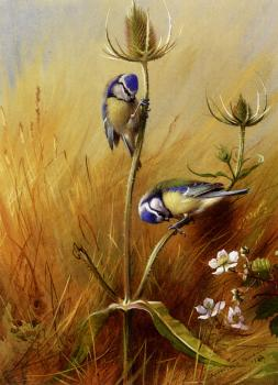 Archibald Thorburn : Bluetits On A Teasel