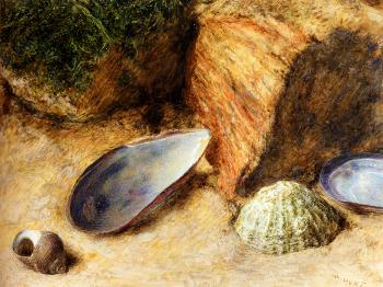 William Henry Hunt : Still Life With Sea Shells On A Mossy Bank