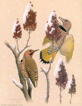 William Zimmerman : Northern Yellow-shafted Flicker