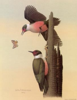 William Zimmerman : Lewis Woodpecker