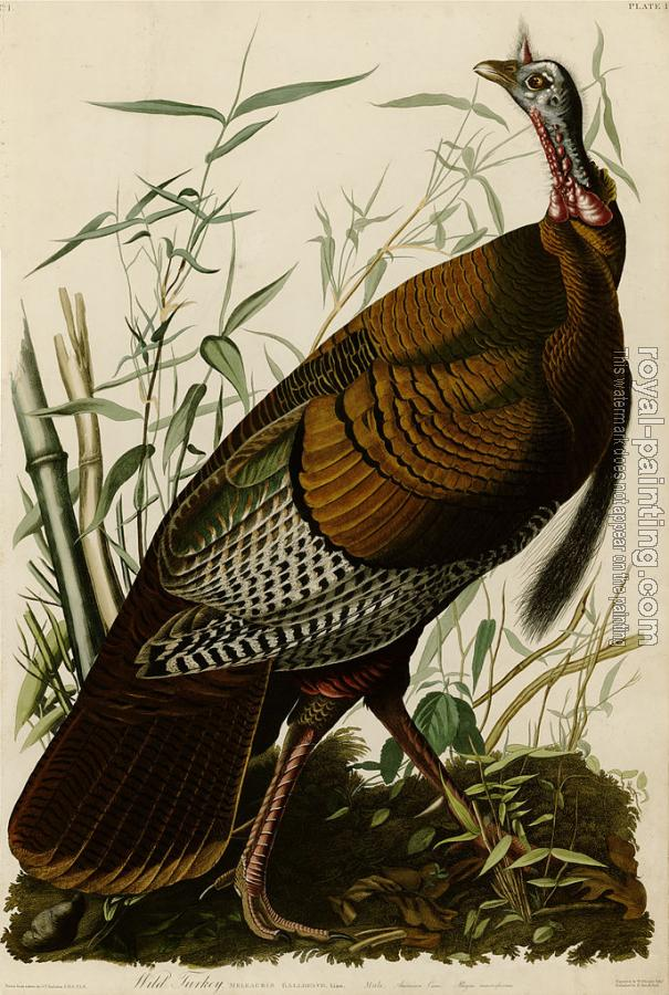 John James Audubon : Wild turkey