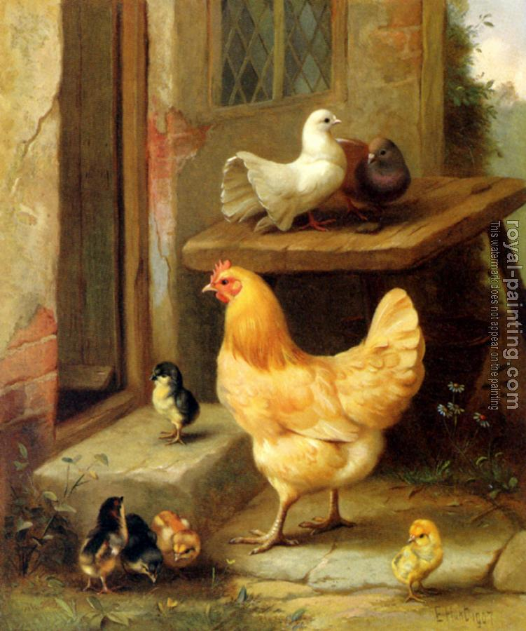A Hen Chicks And Pigeons