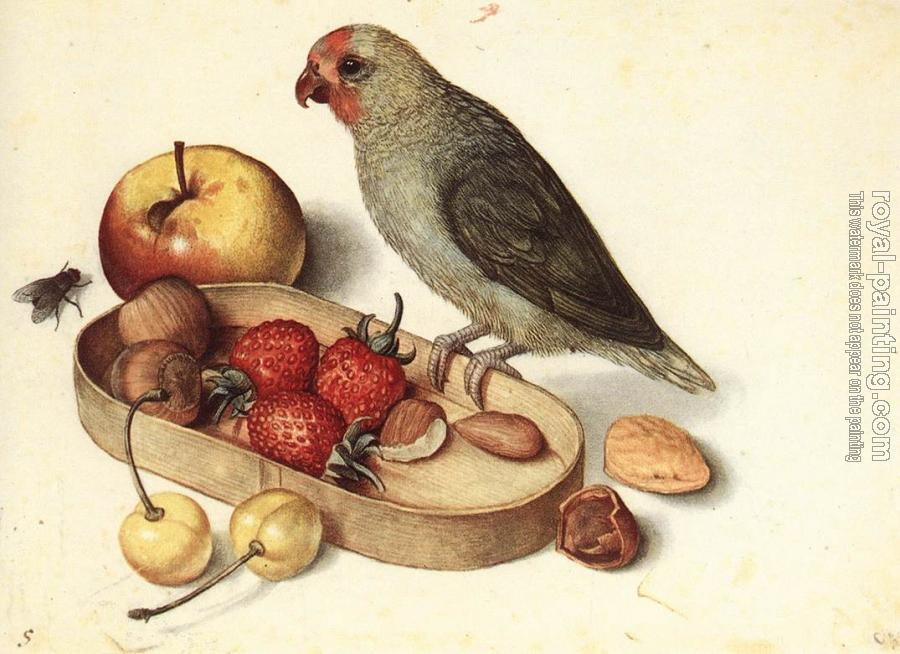 George Flegel : Still-Life with Pygmy Parrot
