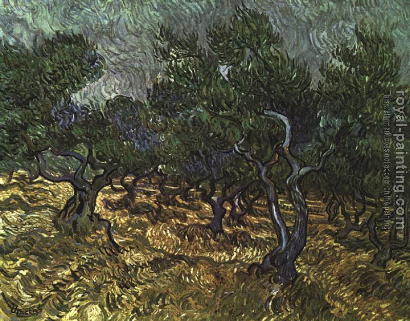 The Olive Grove II