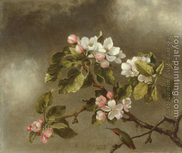 Martin Johnson Heade : Hummingbird And Apple Blossoms