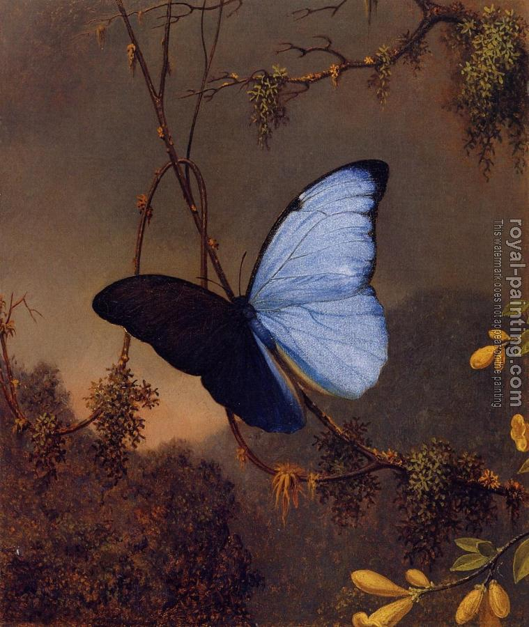 Martin Johnson Heade : Blue Morpho Butterfly II