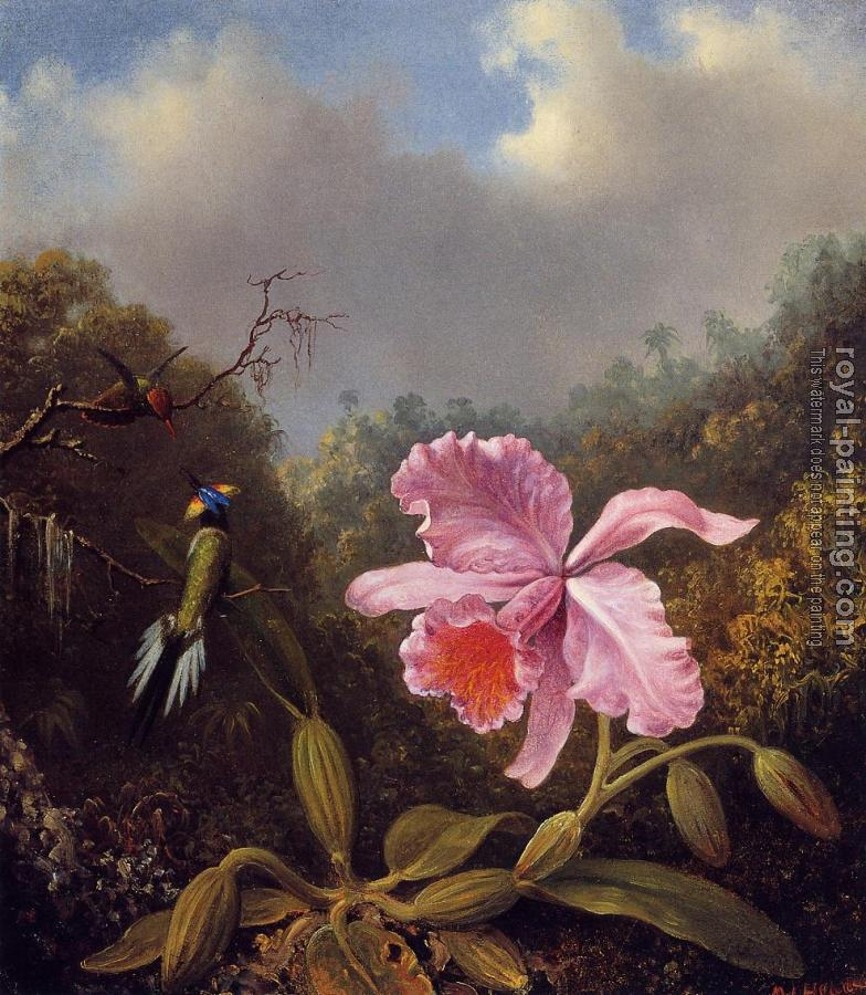 Martin Johnson Heade : Fighting Hummingbirds with Pink Orchid