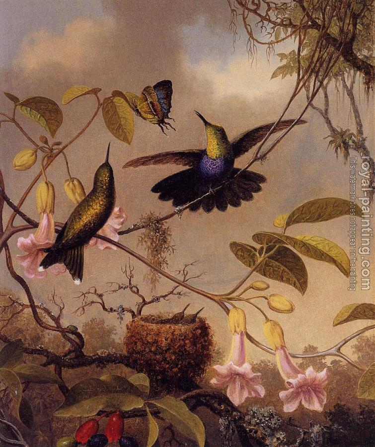 Martin Johnson Heade : Fort-Tailed Woodnymph